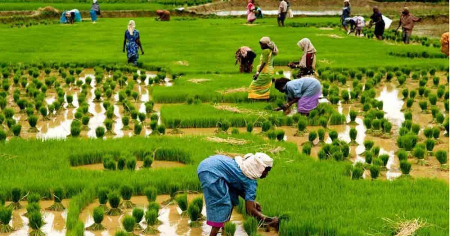 The Important Role Of Agriculture In Nigeria's Economic Development