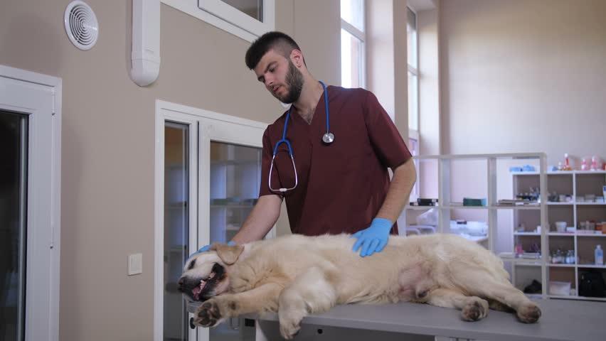 10 Best Veterinary Schools 2020 with Full Description - Latest Updates