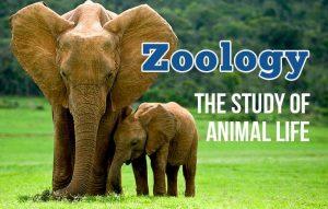 Zoology Study Abroad Programs