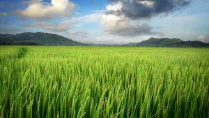 Farm Innovation Nigeria Limited