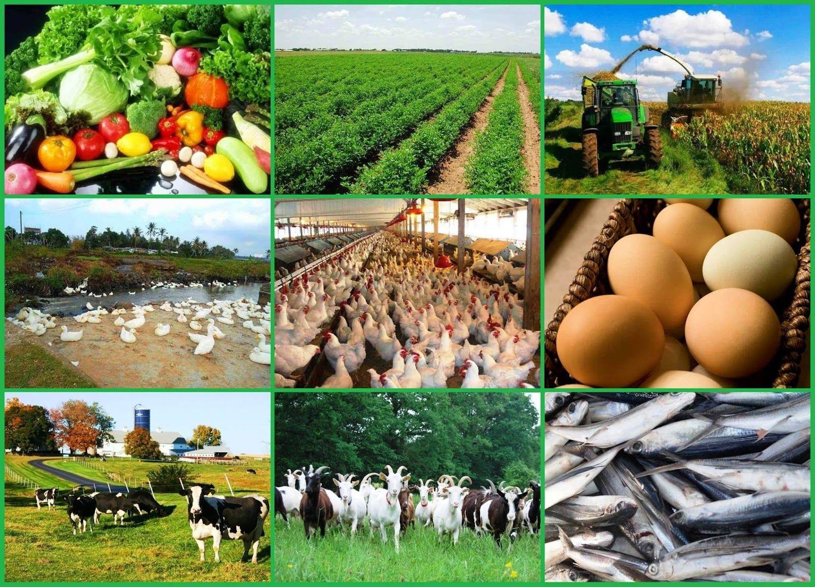 Nigerian Agricultural Insurance Corporation Recruitment 2021/2022 Application Portal