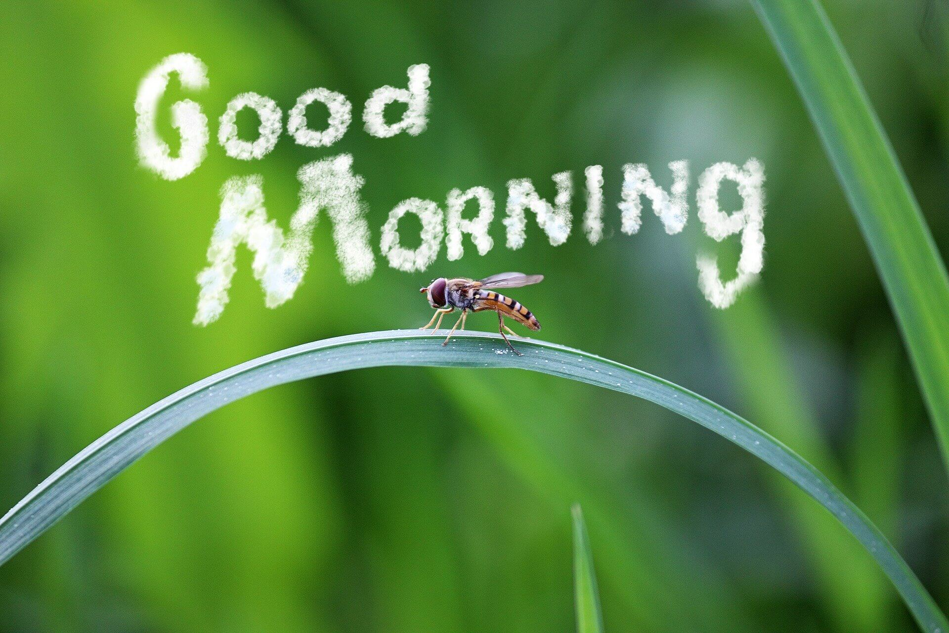 July Enticing Good Morning