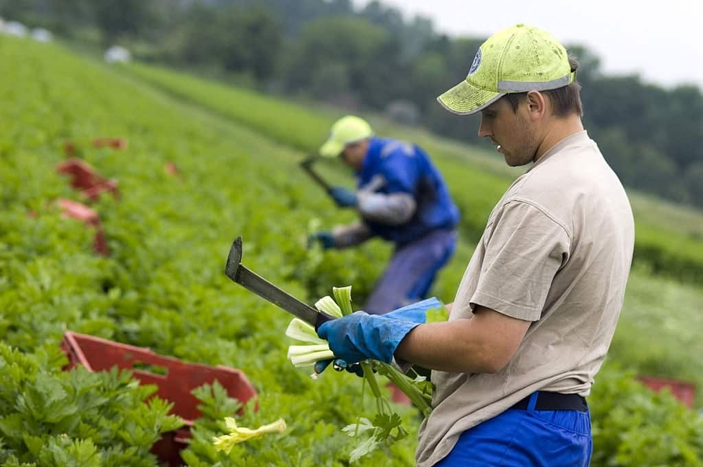 Immigrant jobs